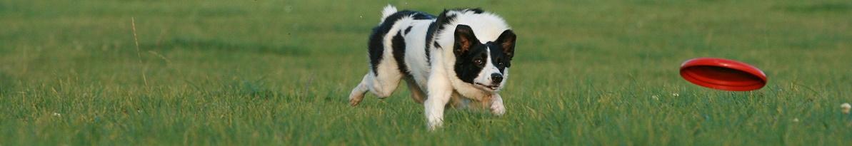magnetfeldtherapie erfahrungen hund