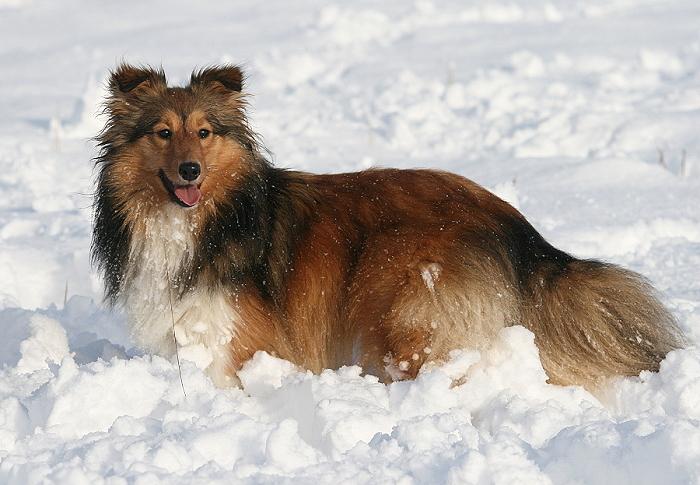 Und findet es lustig mit lauter schneeb llen im fell - Schneebilder lustig ...